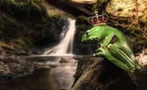 Auf den Dschungelkönig wetten